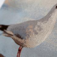 Homepage Slide – Seagull